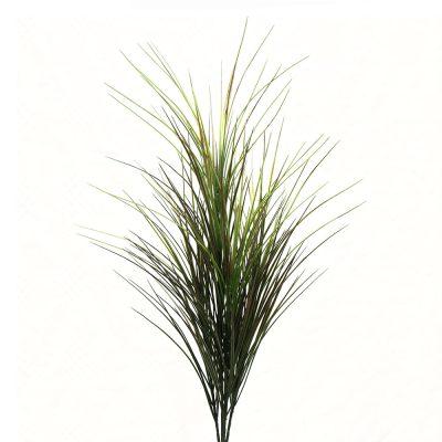 DRACENA GRASS