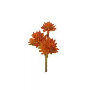 orange succulent wd024