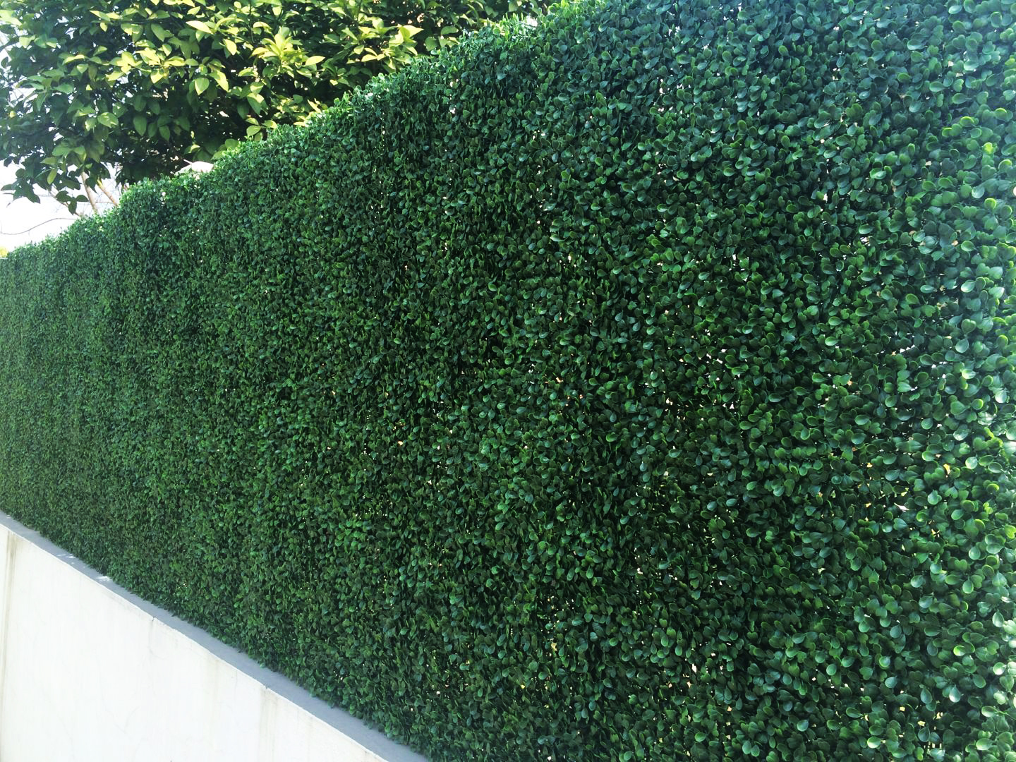 Boxwood Mat 50x50cm Uv Stabilised Artificial Plants Online