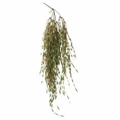 REPTILE & AQUARIUM PLANTS