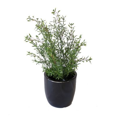 ARTIFICIAL BERRY BUSH 50CM COMPLETE WITH FIBREGLASS POT