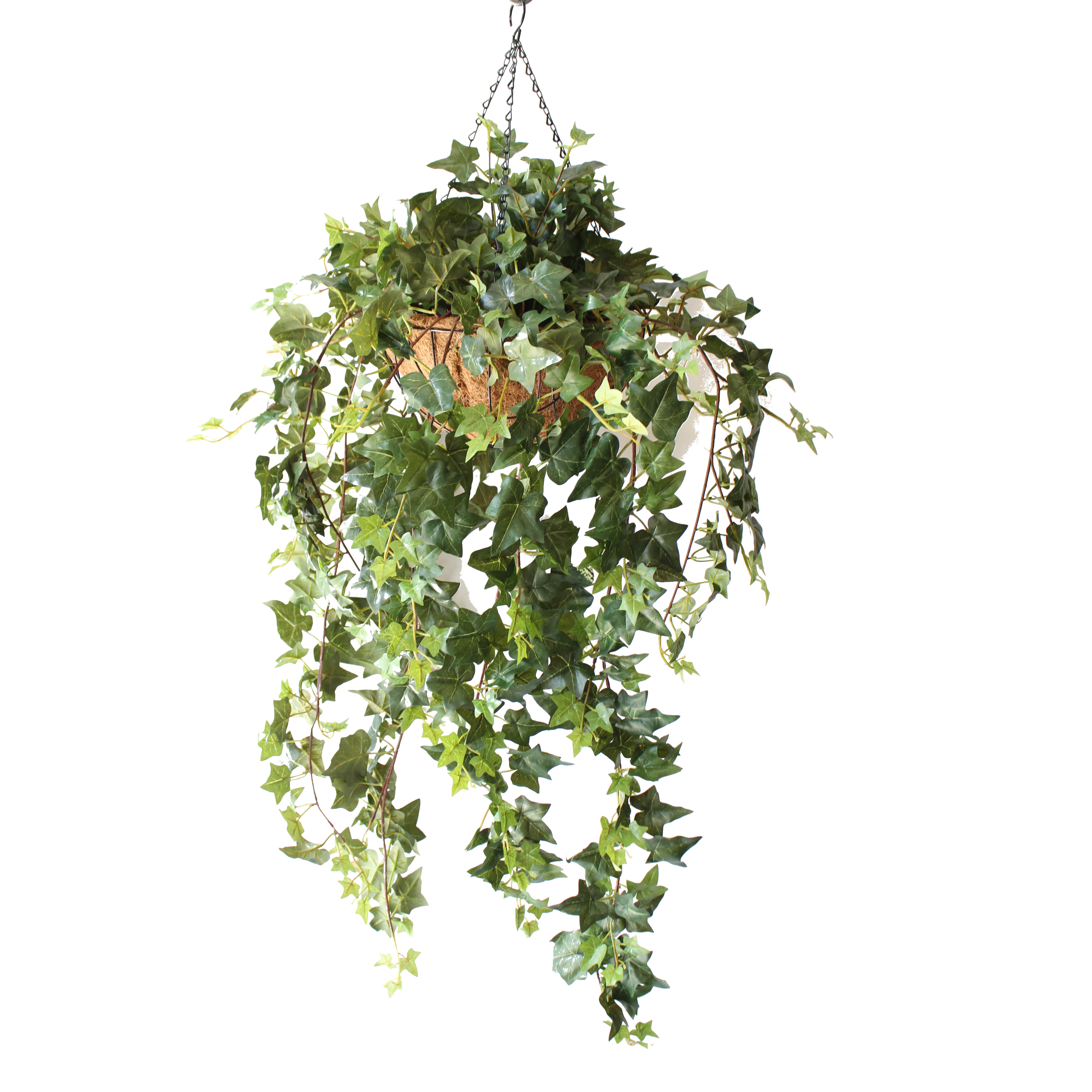 Double Ivy Vine 1m Complete With Hanging Basket